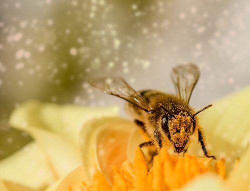 Honey Magic