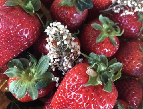 Strawberry Magic (+Cake)